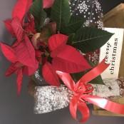 Christmas plant and wine